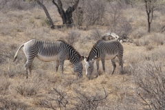 Kenya©PapiyaPaul10