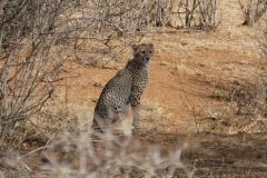 Kenya©PapiyaPaul11