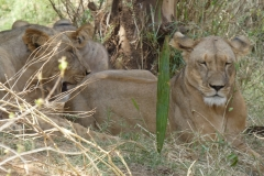 Kenya©PapiyaPaul12