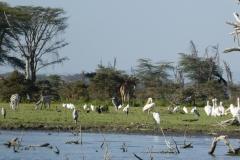 Kenya©PapiyaPaul24
