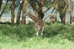 Kenya©PapiyaPaul25