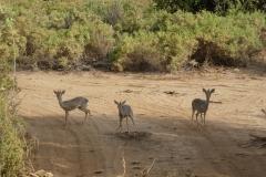 Kenya©PapiyaPaul3