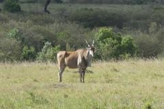 Kenya©PapiyaPaul32