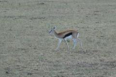 Kenya©PapiyaPaul33
