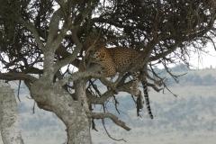 Kenya©PapiyaPaul35