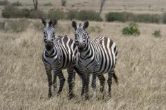 Kenya©PapiyaPaul38