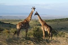 Kenya©PapiyaPaul42