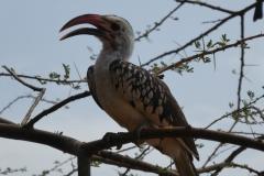 Kenya©PapiyaPaul55