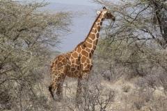 Kenya©PapiyaPaul9